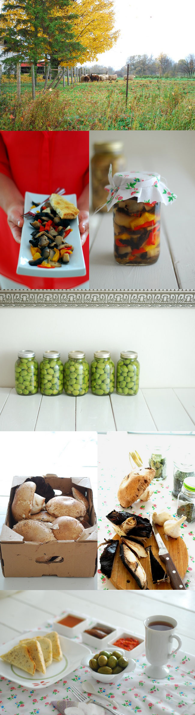 mantar konserve zeytin graten (3)